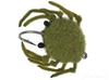 Money Crab Olive