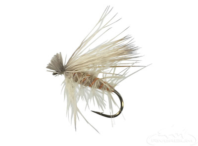 Spruce Moth