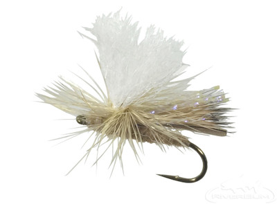 Parachute Spruce Moth