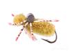 Crab, Turneffe, Olive