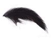 Bunny Leech, Black Fly