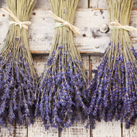 Foxhollow Herb Farm Organic Dried Lavender Bunch