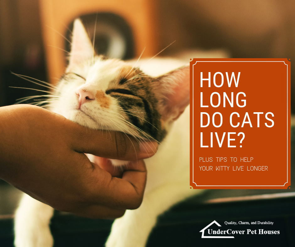 how long do cats live - 940×788