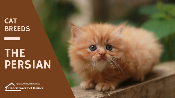 Cat Breeds The Persian Undercover Pet Houses