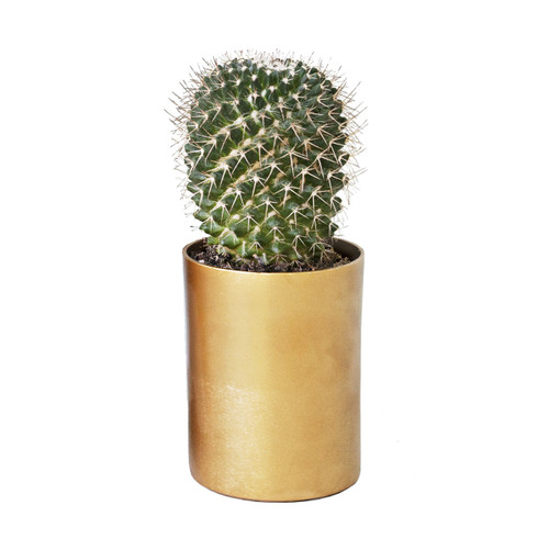 Round brass cactus and succulent planter