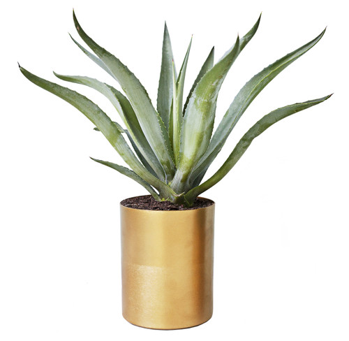 Medium Round Brass Planter for Cacti or Succulents