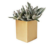 Medium Square Brass Planter
