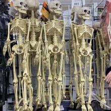 Skeleton - Hanging