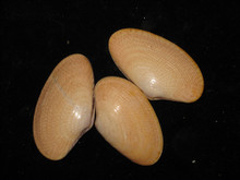 Nylon Shells