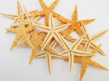 Starfish - Flat Natural