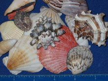 Shell Mix Phillippine