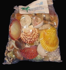 Shell Pack - Exotic - 100+pcs