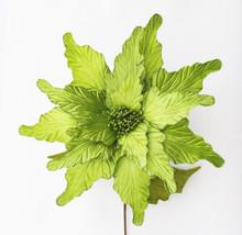 Poinsettia - Glitter/Velvet 50cm