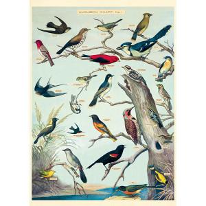 Audubon Chart No.1