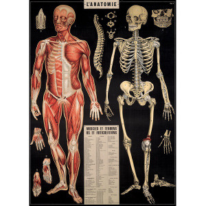 Anatomy Black