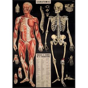 Anatomy Black