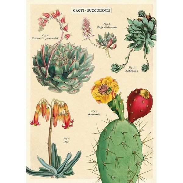 Cacti, Succulents 2