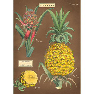 L'Ananas (pineapple)