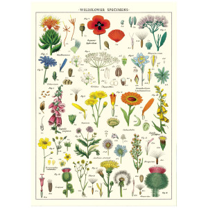 Wildflower Specimens
