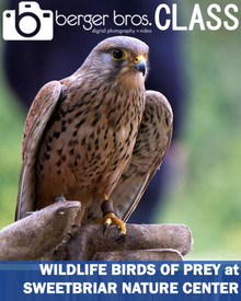 7/10/20  - Wildlife Birds of Prey at Sweetbriar Nature Center