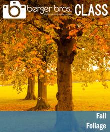 10/24/20 - Fall Foliage