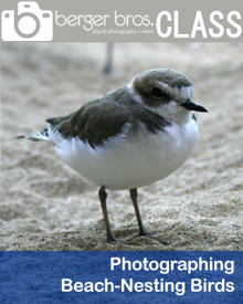 08/07/20 - Photographing Beach-Nesting Birds