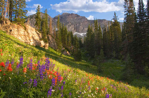 Alpine Meadow Inspiration