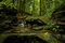 Deep Rainforest Colors
