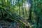 Light on Rainforest Colors