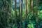 Lush Rainforest Colors