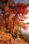 Autumn Paint Colors