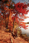 Color in Space Autumn Woods Palette™ inspiration2