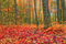 Color in Space Autumn Woods Palette™ inspiration