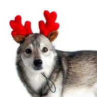 Midlee Christmas Reindeer Small Dog Antlers