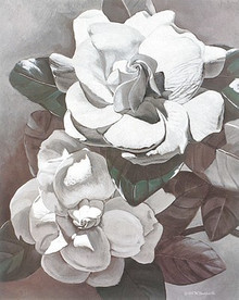 White Gardenias--M.Hornbuckle