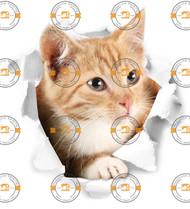 Ginger Cat Wall Sticker
