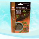 Fridmani Dotty back Fish - Pseudochromis fridmani - Orchid Dottyback - Fridman's Dottyback Fish