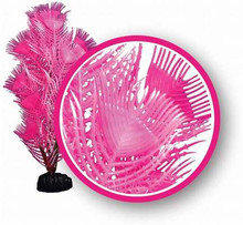 Weco plant princess feather 6""