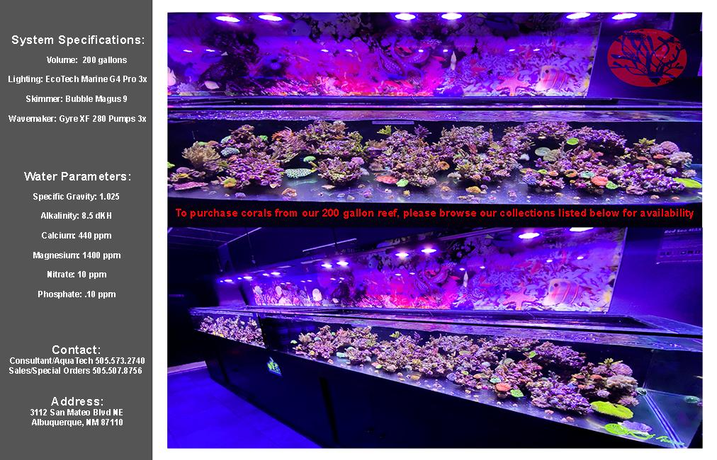 200g-reef-1-copy.jpg