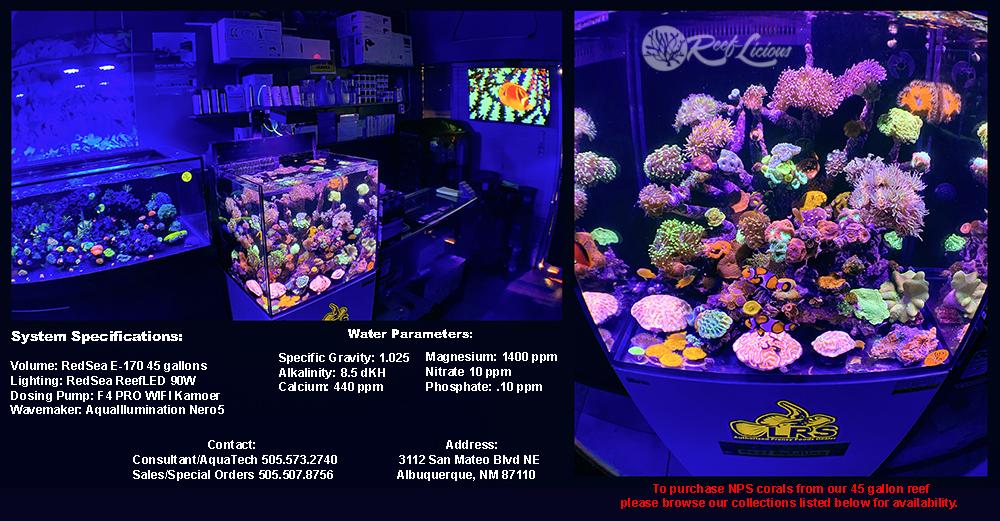 45grf1-nps-corals.jpg