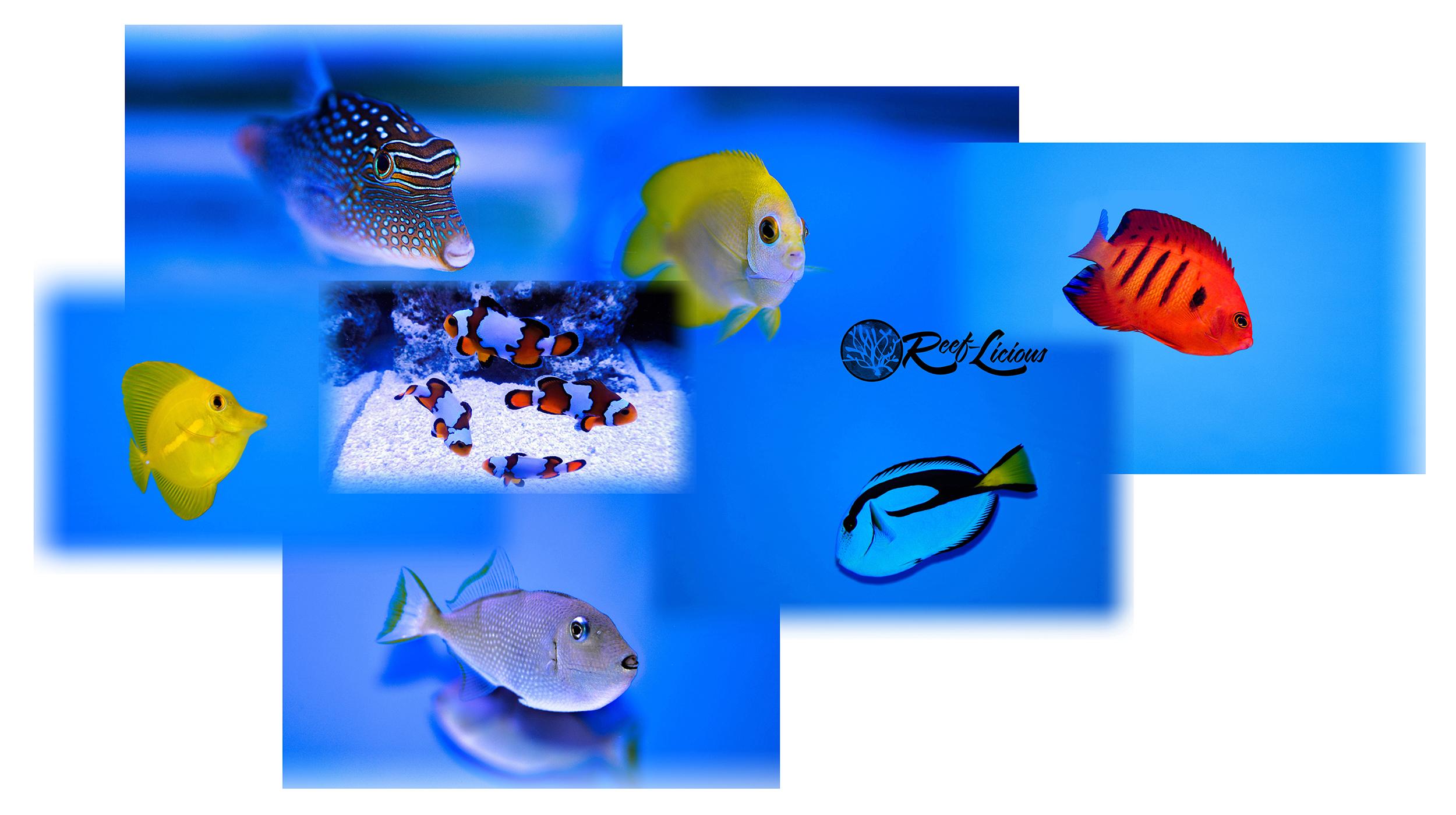 fish3.jpg