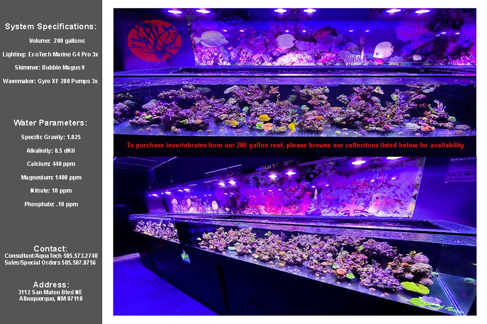 invertebrates1.jpg