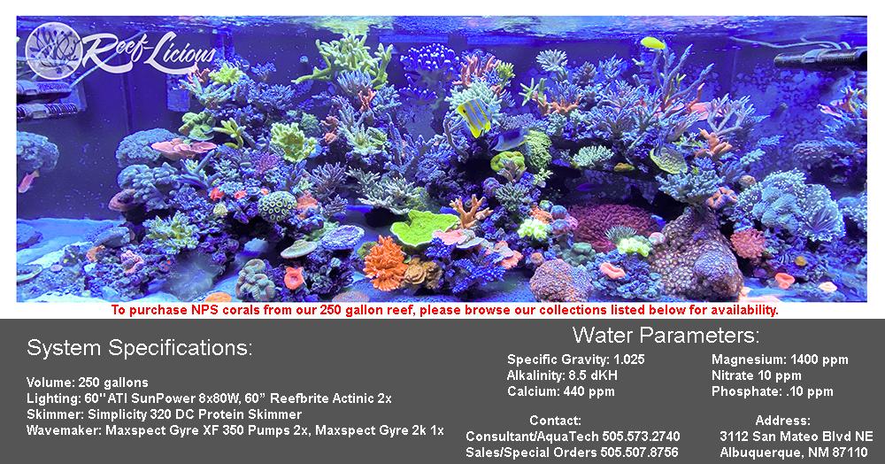 nps-corals.jpg