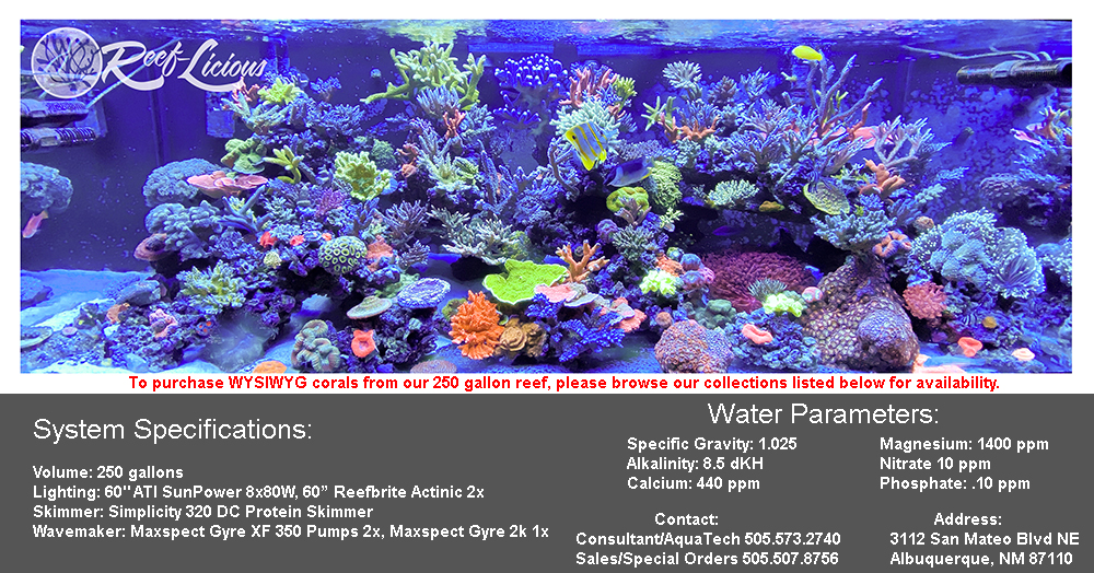 wysiwyg-corals.jpg