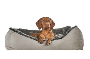 Scoop Dog Beds