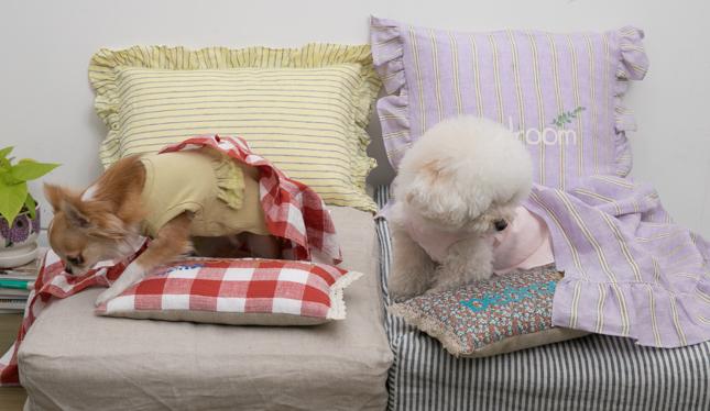 bedroom-pillow-main.jpg
