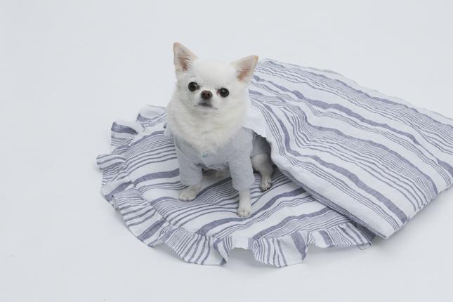 brilliant-blanket-main.jpg