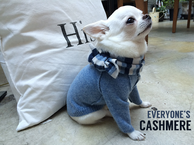 cashmere-cardigan-main.jpg