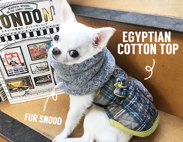 egyptian-top-main.jpg