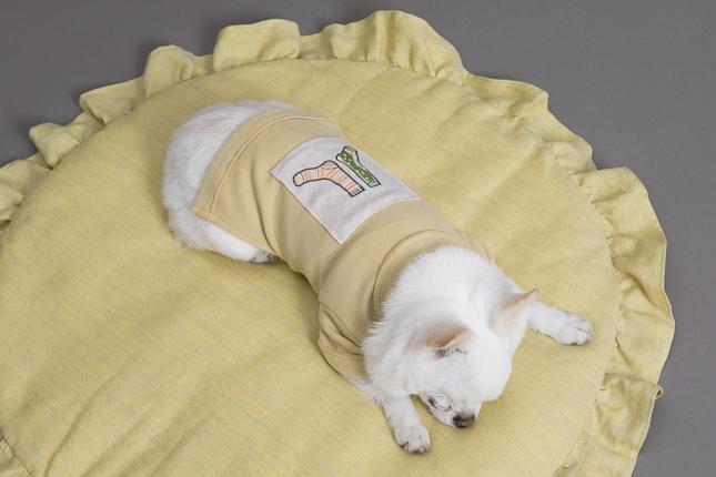 louisdog-appliqu-t-shirt-main.jpg
